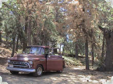 Tired Pines and Vintage Foley Truck (2003)